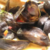 Fresh Live Mussels